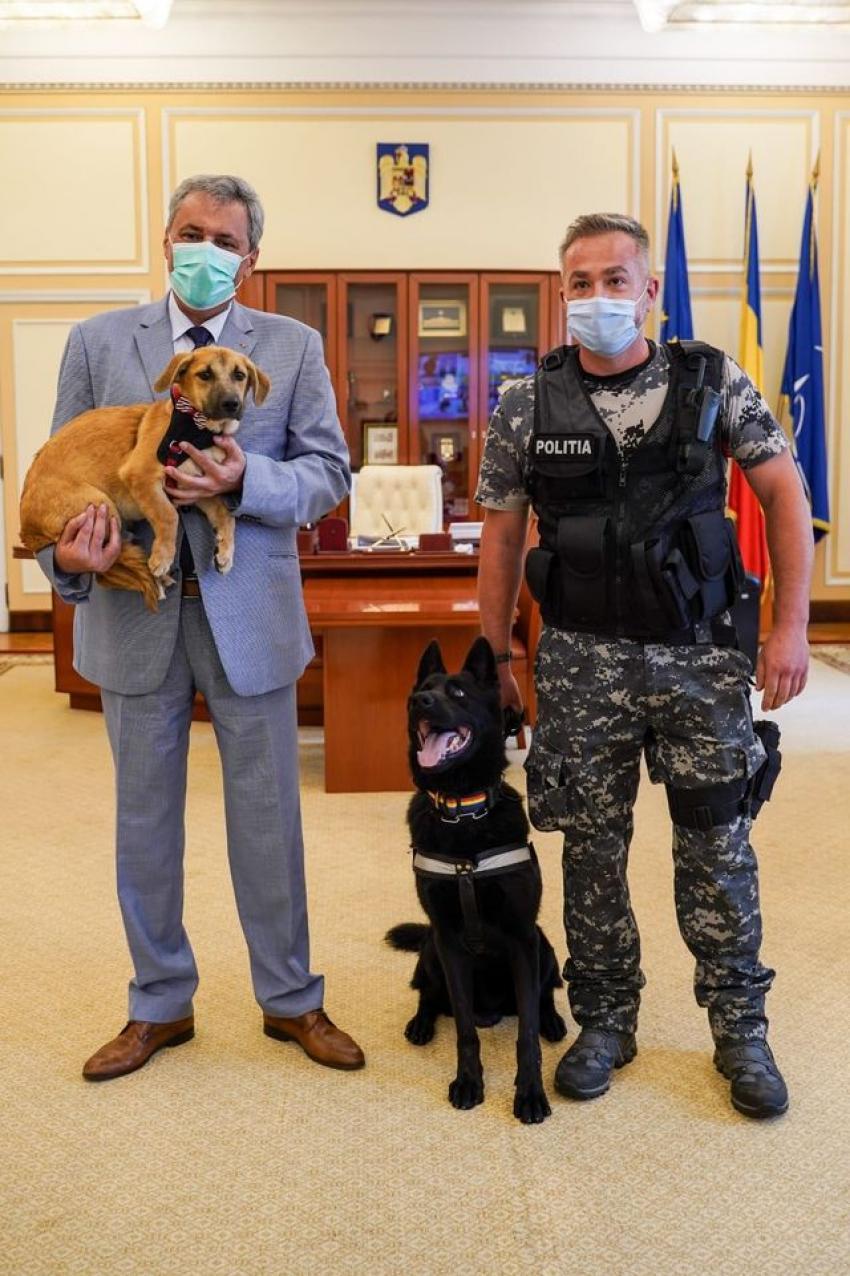 Se înființează Poliția Animalelor în România. Ce atribuții vor avea polițiștii