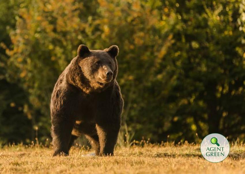 Acuzații după uciderea ursului Arthur de către un prinț austriac