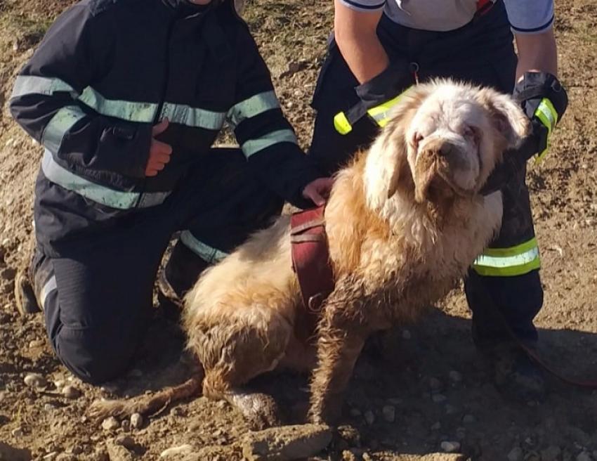 Pompierii au salvat un Saint-Bernard nevăzător, căzut în apa unui lac de agrement