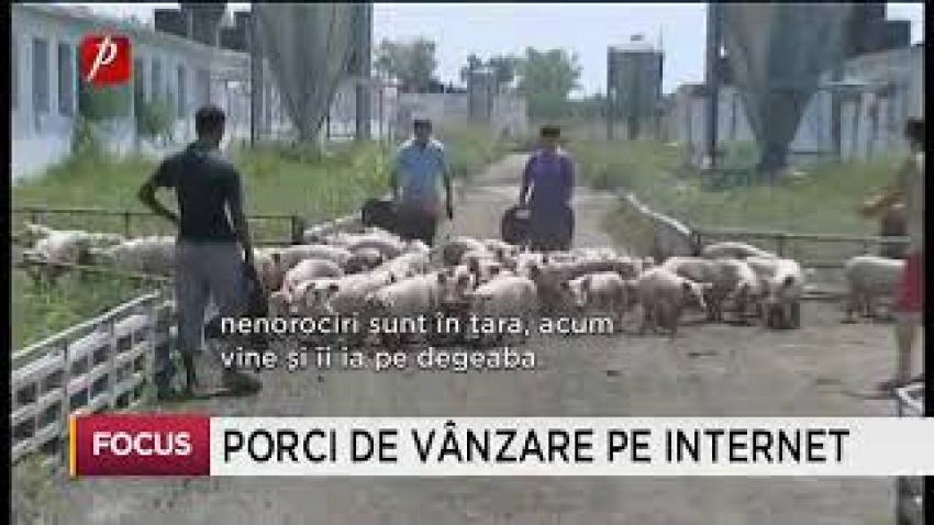 Restricțiile de pestă porcină ocolite prin intermediul vânzărilor online
